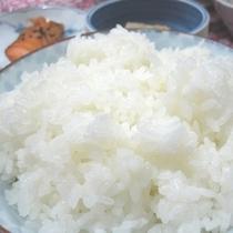 食べ放題の福井県産コシヒカリ