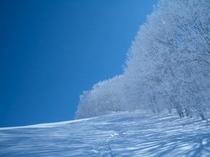 樹氷の美しい冬の景色