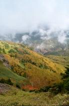 雲に覆われる紅葉