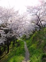 真田 信綱寺の桜4月中旬〜下旬