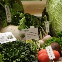 【自家農園】瑞々しい野菜(2)