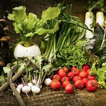【自家農園】瑞々しい野菜(1)