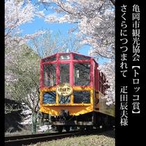 ▲亀岡市観光協会【トロッコ賞】さくらにつつまれて 疋田辰夫様