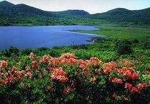 雄国沼のレンゲツツジ