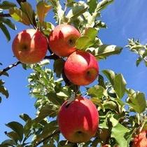 りんご狩りプラン・松井農園