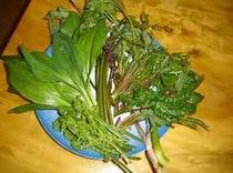 天然の山菜