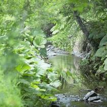 当館からほど近くを流れる川。涼やかなせせらぎが心地よく聴こえます。