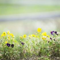 四季折々に咲く花が緑を彩ります。