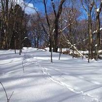雪の足跡500