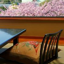 ■お部屋からみなみ桜