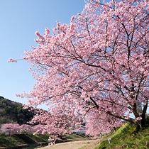 ■みなみの桜まつり