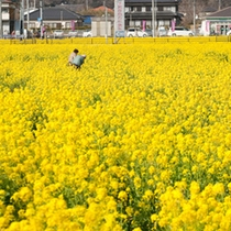 ■菜の花畑は下賀茂温泉入り口