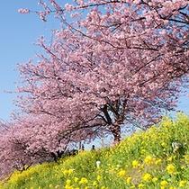 ■みなみの桜まつりと菜の花まつり2