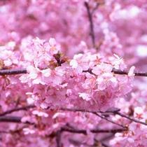 ■みなみの桜