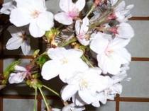 館内に生けた季節のお花です。