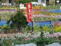 潮風王国お花畑一例