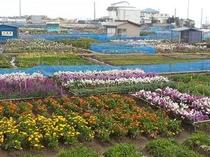 白間津お花畑250227-2