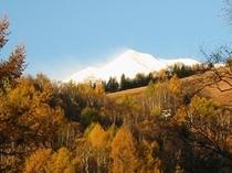 唐松の金色と乗鞍岳