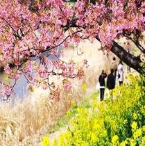 2月5日〜3月10日桜祭り