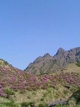 高岳*阿蘇五岳の中で一番高い山*1592(ヒゴクニ)