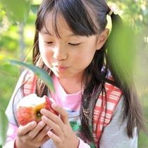 ≪果物狩り≫りんご