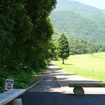 *癒しの森/御鹿池コース。緑をからだいっぱい受け止めてリフレッシュ!