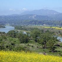 *飯山・菜の花畑/見た目にかわいく、香りも豊かな菜の花。