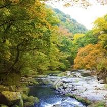 【熊本の観光】菊池渓谷
