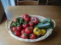 夏野菜の色の美しさ