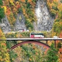 白山スーパー林道紅葉イメージ