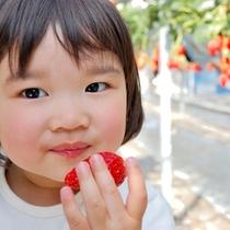 甘〜いイチゴに大満足♪