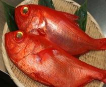 稲取金目鯛