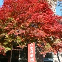 【老神温泉街】秋の色を探しに散策しませんか?