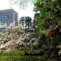 庭園 椿と河津桜