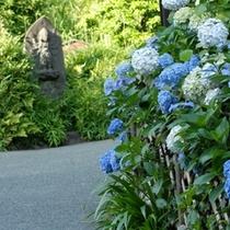 紫陽花の香り 庭園小道