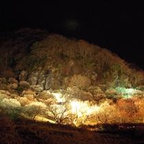 ●幕山梅林ライトアップ