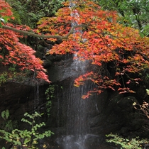 ●奥湯河原の紅葉