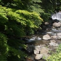 ●藤木川清流