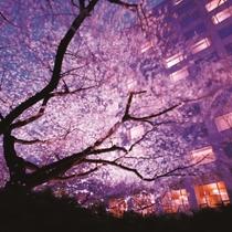 ■庭園から見た夜桜のイメージ