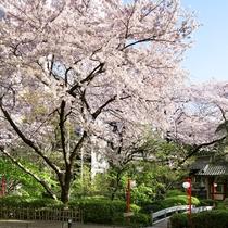 ■春の日本庭園