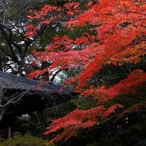 ■日本庭園の紅葉イメージ