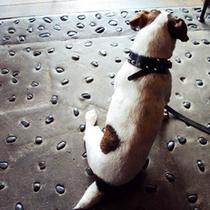 """☆当館看板犬☆""""コイタロウくん""""皆様のお越しをお待ちしております♪"""