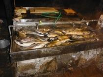 鮭釣り成果