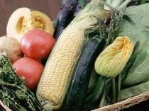 新鮮な有機栽培野菜