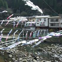 3500匹の鯉のぼりが杖立の空を泳ぐ、日本一の鯉のぼり祭!(期間4/1〜GW)