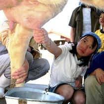 【伊香保グリーン牧場】牛の乳搾り体験!