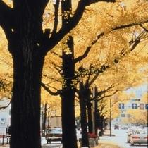 ◆秋/ホテルから足をのばして。イチョウが色づく御堂筋は秋の大阪の街のシンボル。
