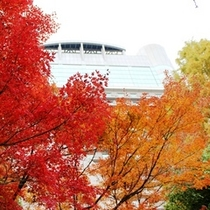 ◆秋/ホテル周辺を散策。ホテル前の公園から見上げた秋景色。