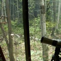 ホテルの裏手は国有林 野鳥の餌付け
