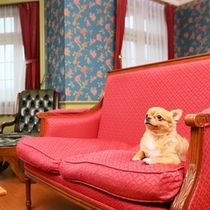 【ペットルーム♪】:お部屋で一緒に3